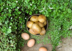 """""""There was a deep little hollow where you could build a sort of tiny oven with stones and roast potatoes and eggs in it . . . . You could buy both potatoes and eggs and eat as many as you liked without feeling as if you were taking food out of the mouths of fourteen people."""" --The Secret Garden"""
