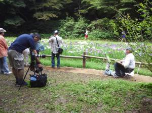 Iris Gardens at Meiji Shrine on a sunny day. A photographer takes a picture of the painter capturing the flowers in full bloom.