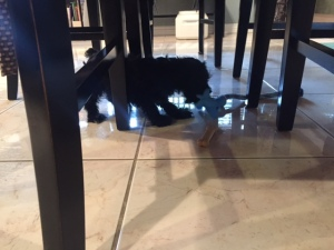 His favorite place is under the kitchen table.