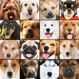 Calling All Dog-Lovers