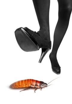 Adieu, cockroach