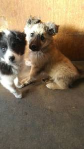 Two puppies, sitting