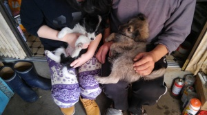 Two mongrel puppies held on laps.