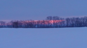 snow, leafless trees, dawn a'comin'.