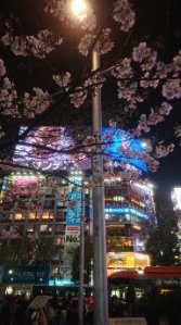 Cherry blossoms illuminated in the dark by the digital billboards