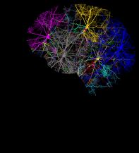 cranium-3244118_640