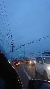 A cloudy scene as dusk with hundreds of crows on the power lines at a stoplight