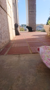 Black lady cat pressed against a front door. Another black cat next to a pillar, ears back. Neither are looking at each other.