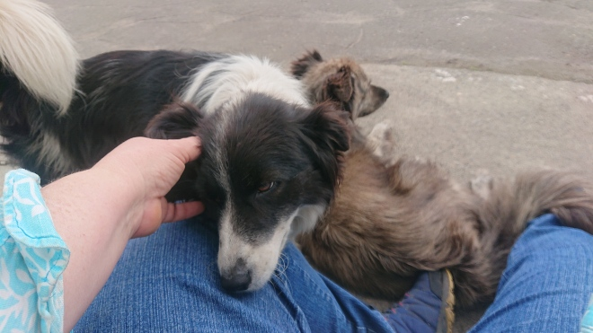 two dogs resting on owner's foot and knee.