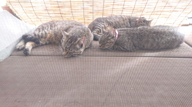 Stretched-out short-haired tabby cats (three of them). They are on a mat on the porch, and in the shade of a reed curtain. All are sleeping.
